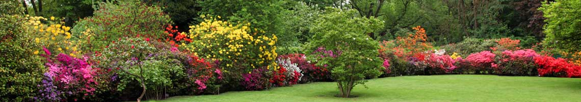 Trees and shrubs - H & H Landcaping